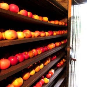 OSC autumn and apples