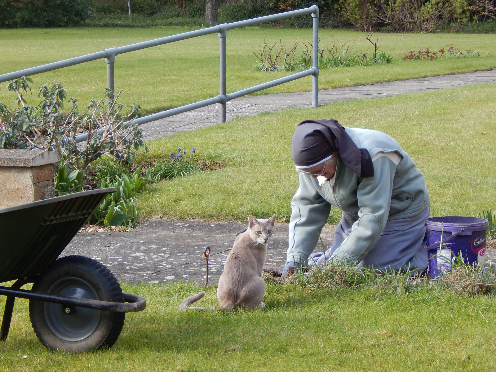 SLG Sr Susan in the garden with a cat