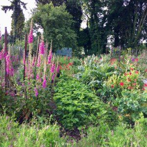 SSC Veg garden, credit Juliette